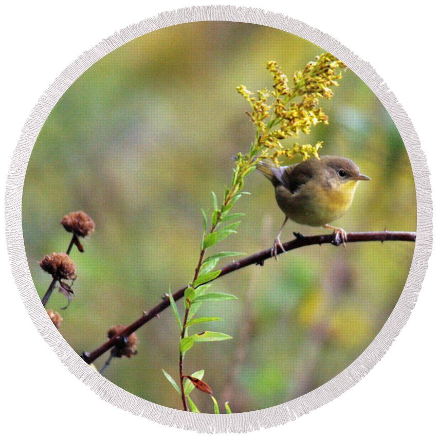 Common Yellow Throat Round Beach Towel featuring the photograph Yellow Throat In Late Summer Prairie by Crystal Heitzman Renskers