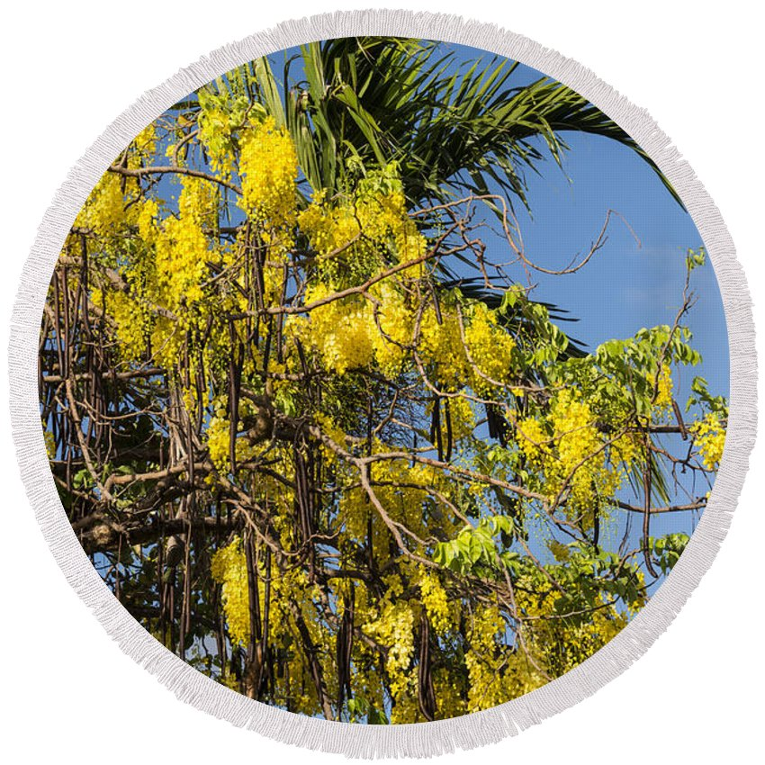 Port Douglas Australia Tree Trees Bloom Yellow Wisteria Blooms Flower Flowers Branch Branches Limb Limbs Leaf Leaves Round Beach Towel featuring the photograph Yellow Wisteria Blooms by Bob Phillips