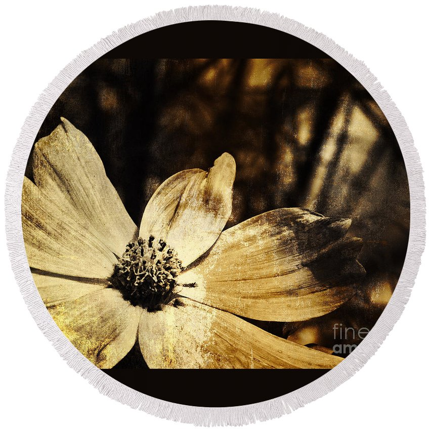 Cosmos Round Beach Towel featuring the photograph Yesterday's Flower by Pam Holdsworth