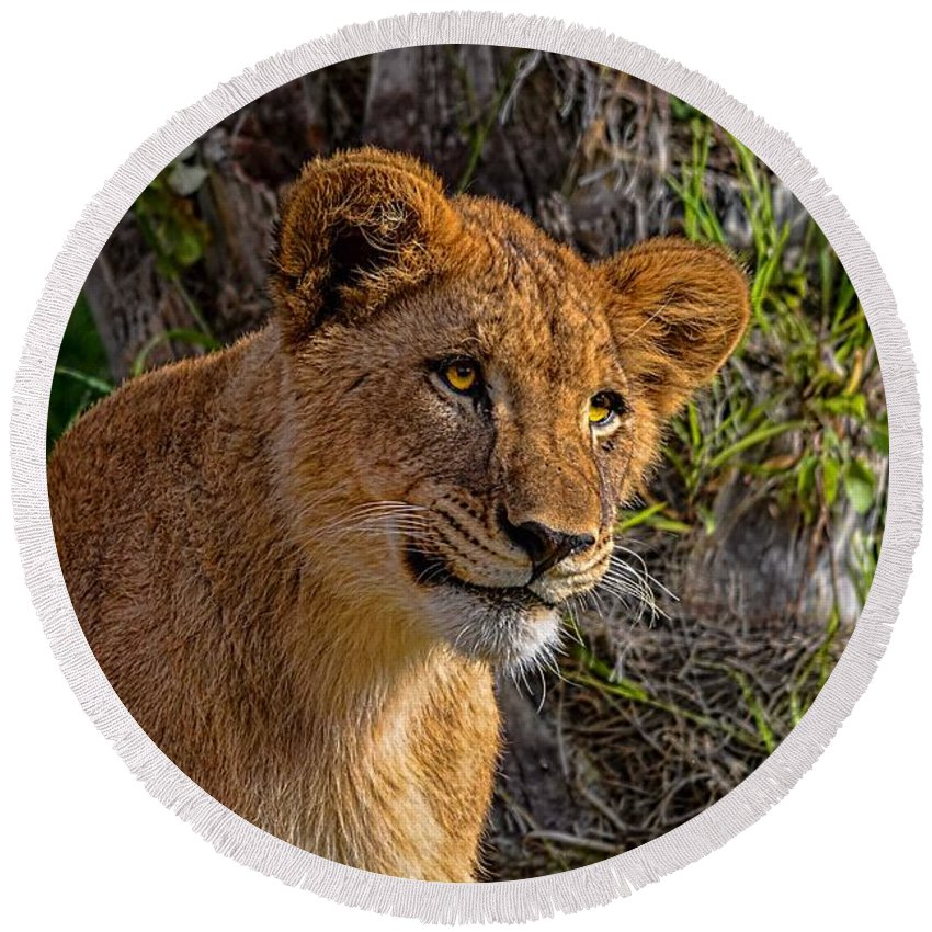 California Round Beach Towel featuring the photograph Your Lioness by Tommy Anderson
