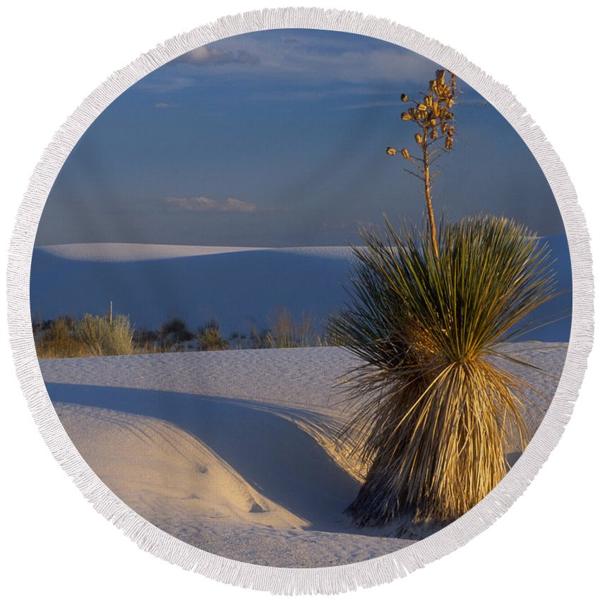 Yucca Round Beach Towel featuring the photograph Yucca At White Sands by Dave Mills