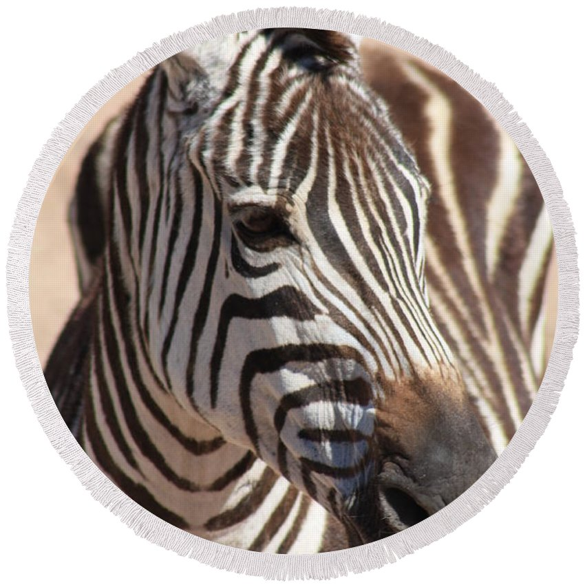 Zebra Round Beach Towel featuring the photograph Zebra by Brandi Maher
