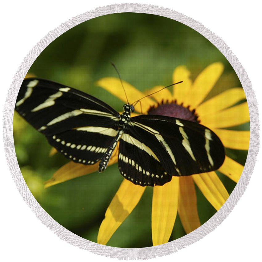 Butterfly Round Beach Towel featuring the photograph Zebra Butterfly by Anthony Sacco