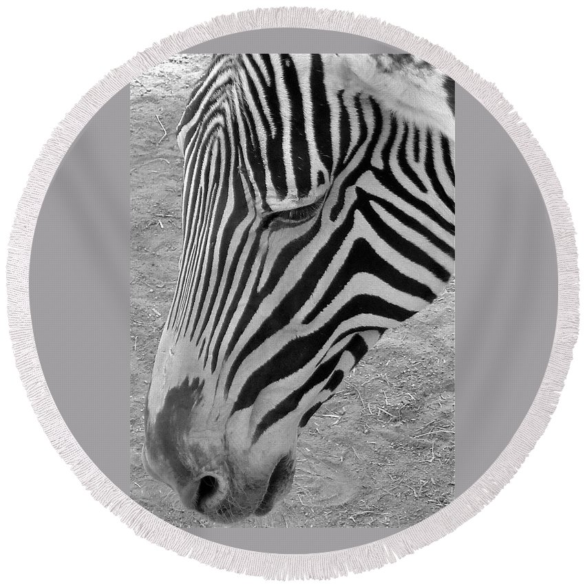 Grevy's Zebra Round Beach Towel featuring the photograph Zebra Face by Denise Mazzocco