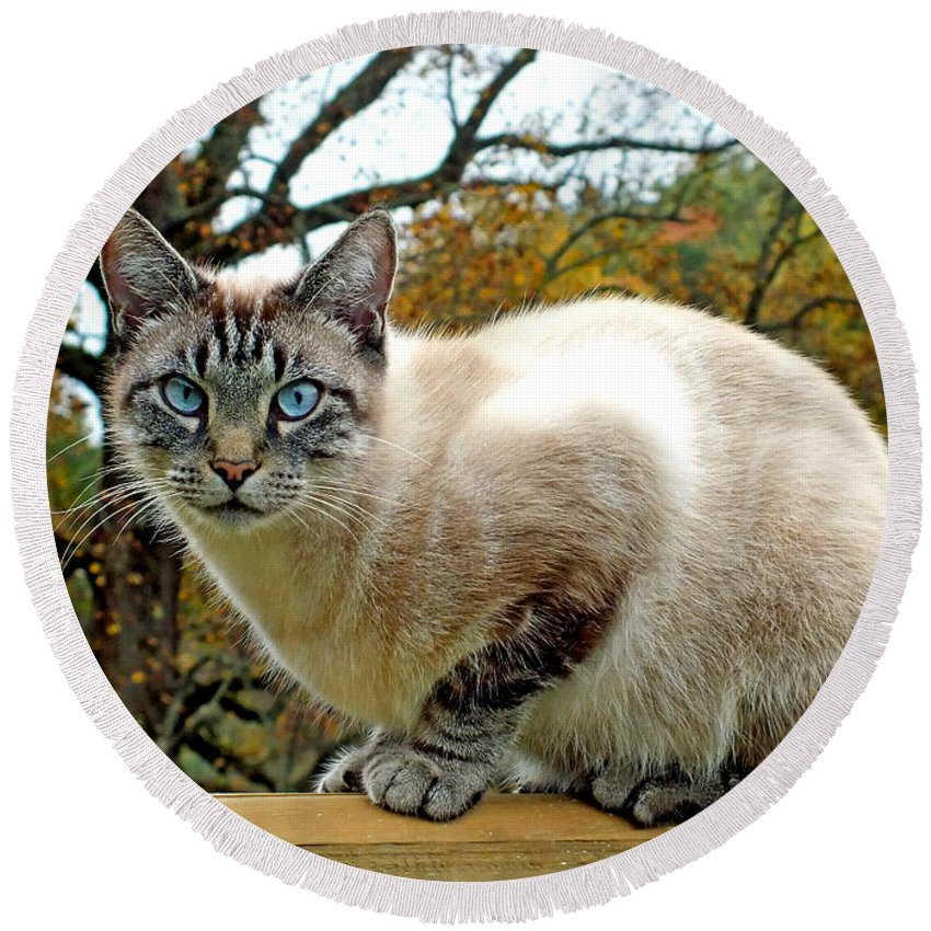 Duane Mccullough Round Beach Towel featuring the photograph Zing The Cat In The Fall by Duane McCullough
