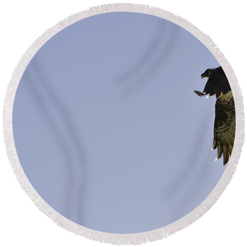Osprey Round Beach Towel featuring the photograph Osprey Lunch To Go III by Christine Stonebridge