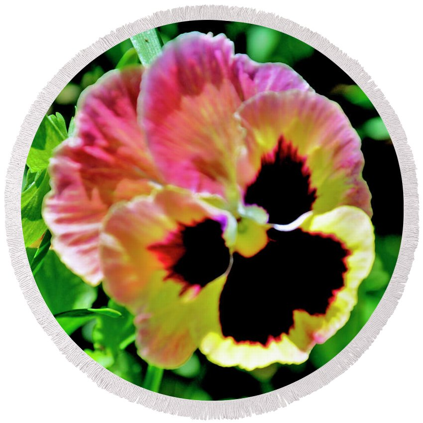 Flowers Round Beach Towel featuring the photograph Pink And Yellow Pansy by Helen Haw
