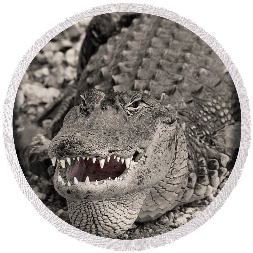 Close-up Round Beach Towel featuring the photograph American Alligator by Rudy Umans