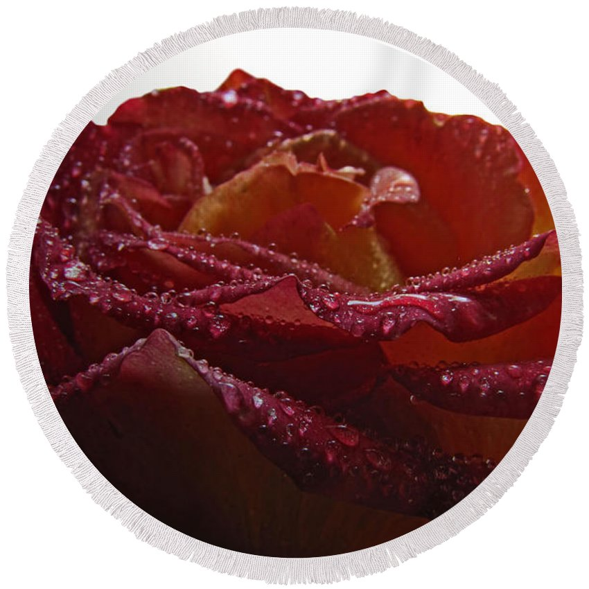 Nature Round Beach Towel featuring the photograph Annaversary Rose II by Debbie Portwood