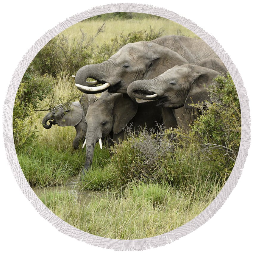Africa Round Beach Towel featuring the photograph At The Waterhole by Michele Burgess
