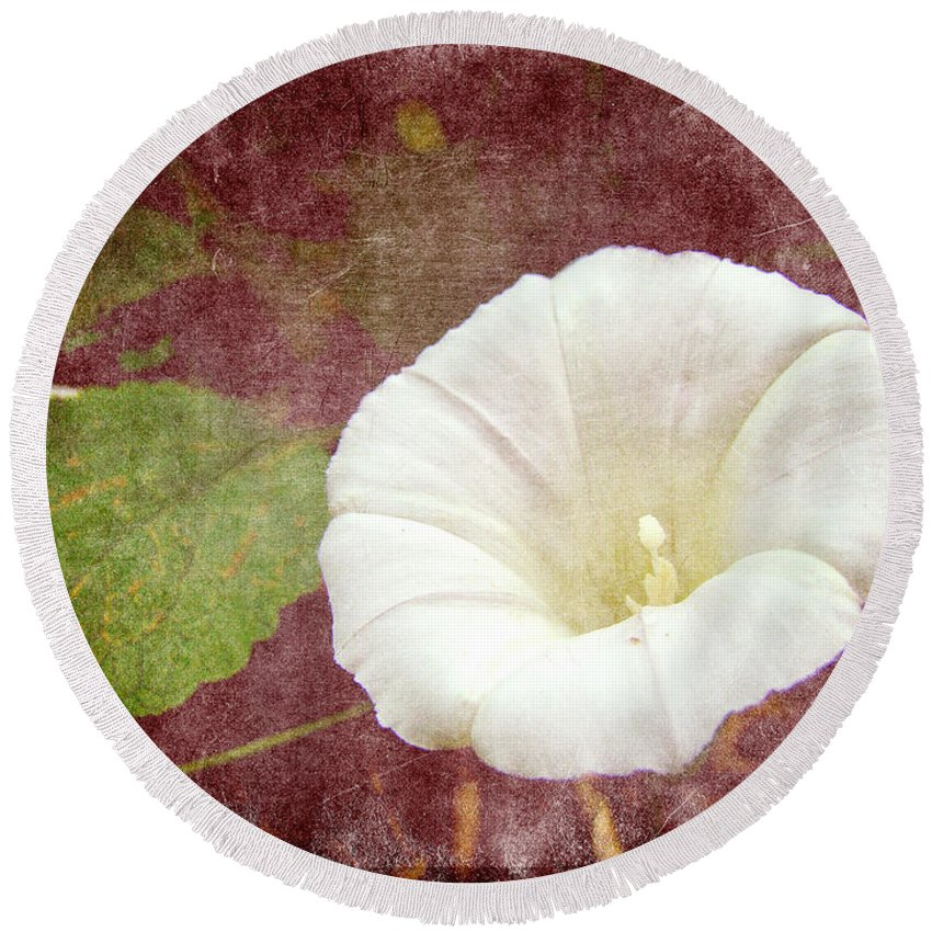 Wildflower Round Beach Towel featuring the photograph Bindweed - The Wild Perennial Morning Glory by Mother Nature