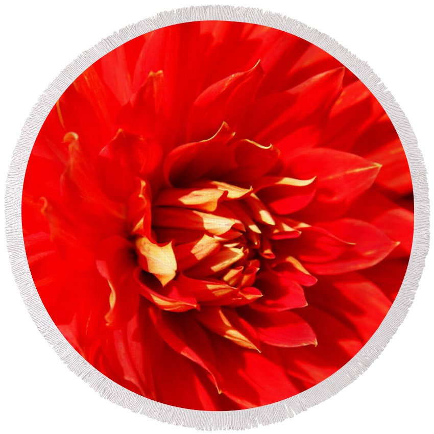 Red Dahlia Round Beach Towel featuring the photograph Blazing Red by Christiane Schulze Art And Photography