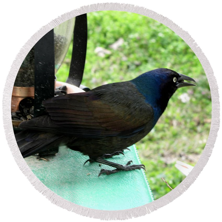 Nature Round Beach Towel featuring the photograph Brewers Black Bird by Debbie Portwood