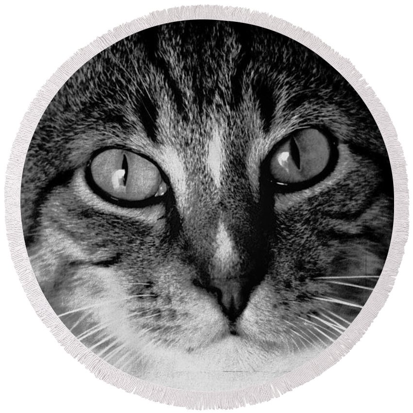 Feline Round Beach Towel featuring the photograph CAT by Ericamaxine Price