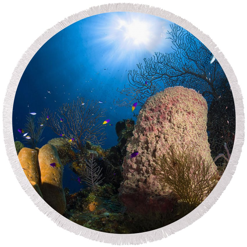 Sea Life Round Beach Towel featuring the photograph Coral And Sponge Reef, Belize by Todd Winner