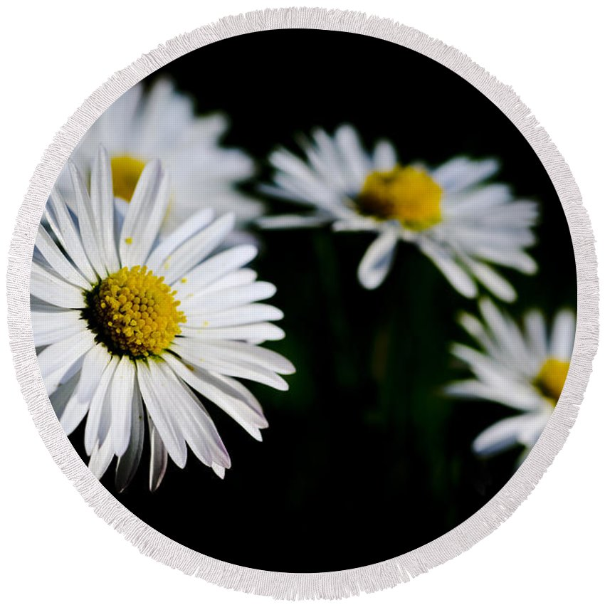 Flower Round Beach Towel featuring the photograph Daisy Flowers by Mats Silvan