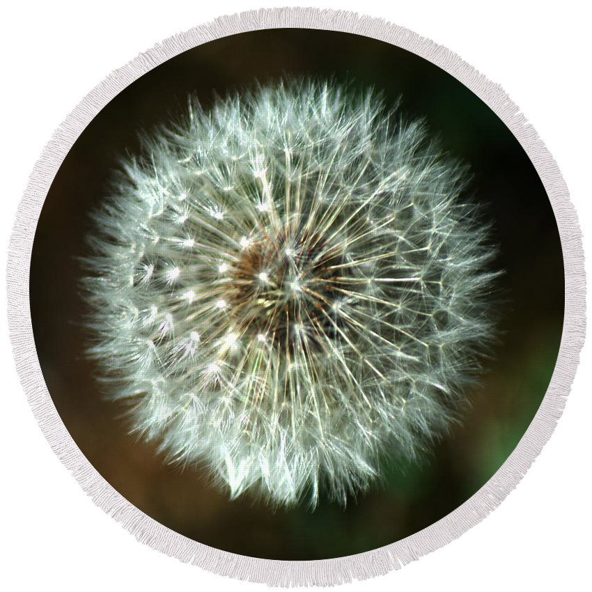 Dandelion Round Beach Towel featuring the photograph Dandelion Seed Head by Chris Day