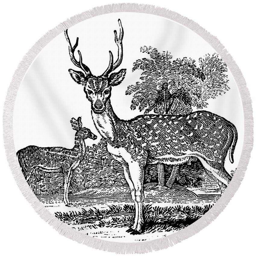 1824 Round Beach Towel featuring the photograph Deer by Granger