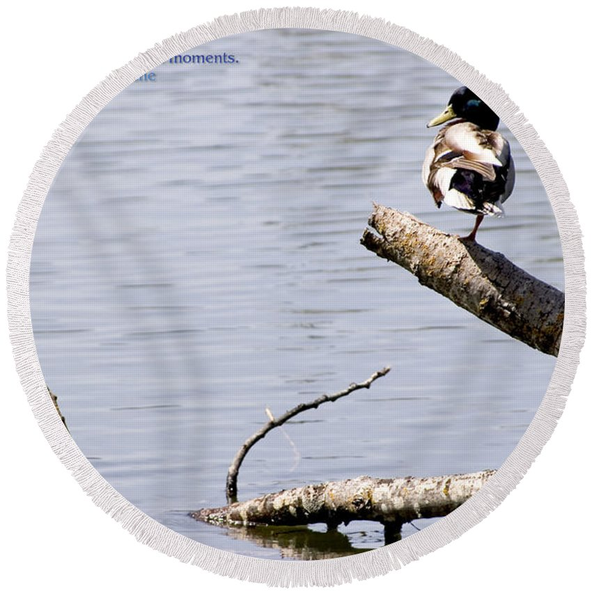 Duck Round Beach Towel featuring the photograph Duck On A Log by Mick Anderson