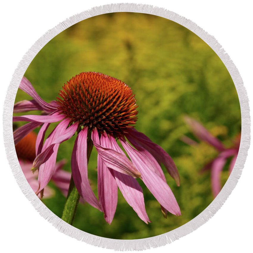 Jouko Lehto Round Beach Towel featuring the photograph Eastern Purple Coneflower by Jouko Lehto