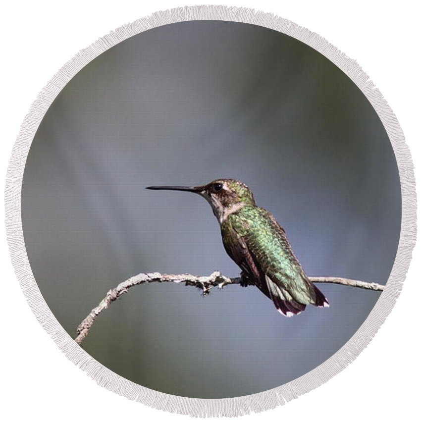 Hummingbird Round Beach Towel featuring the photograph Feathers In Place by Travis Truelove