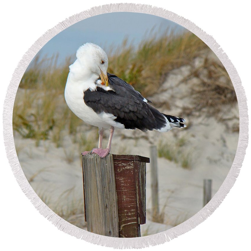Gull Round Beach Towel featuring the photograph Great Black-backed Gull  Larus Marinus by Mother Nature