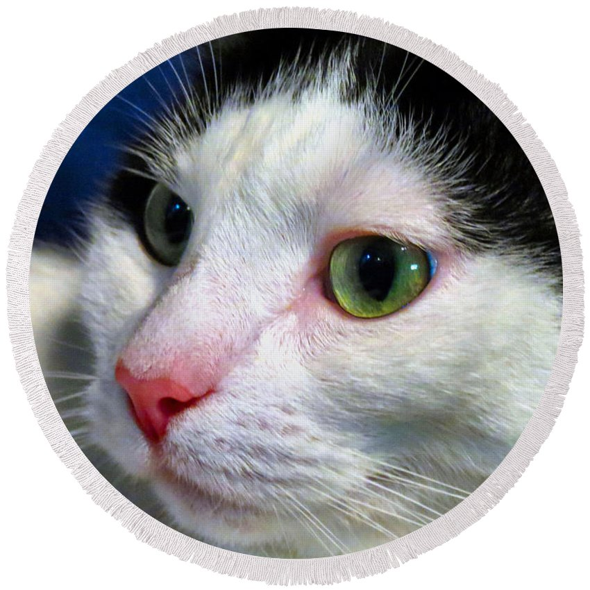 Cat Round Beach Towel featuring the photograph Green Eyes by Art Dingo