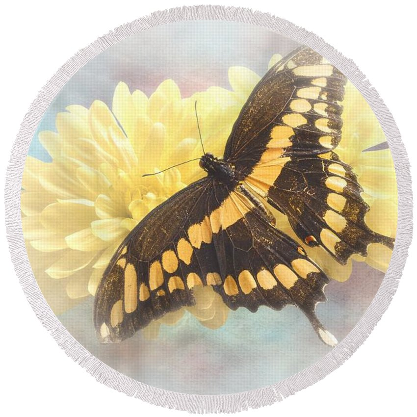Giant Round Beach Towel featuring the photograph Grunge Giant Swallowtail by Rudy Umans