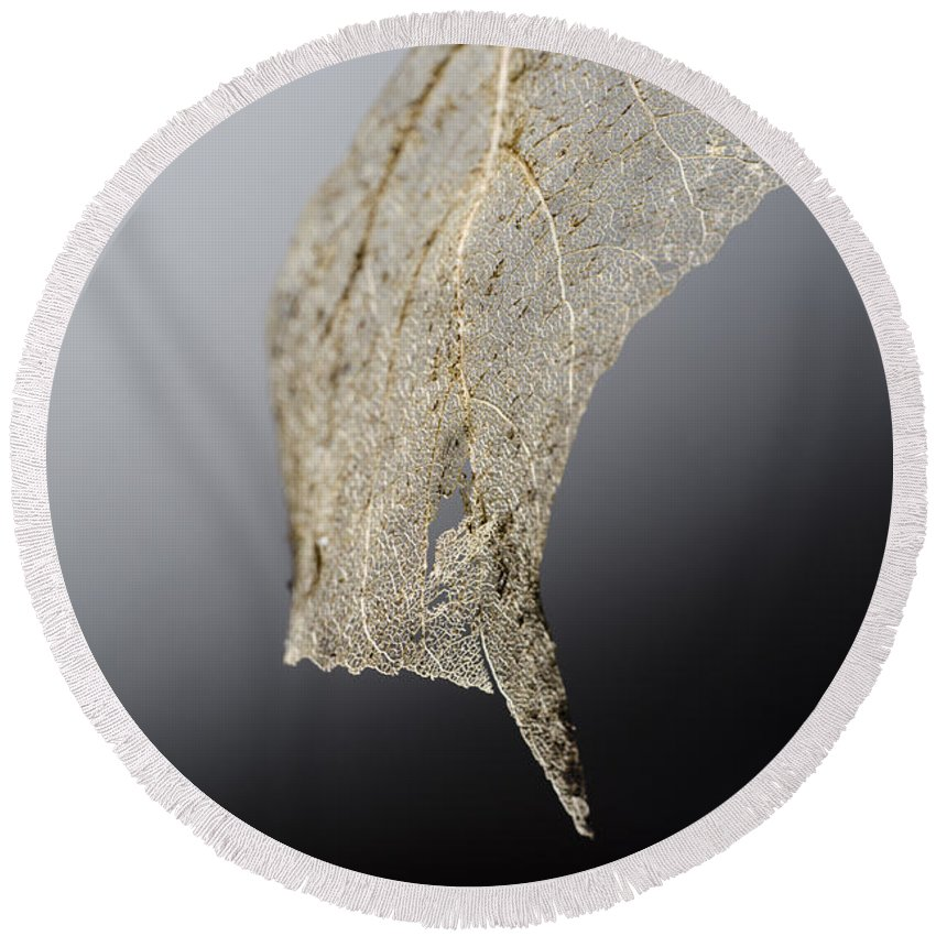 Leaf Round Beach Towel featuring the photograph Leaf Skeleton by Mats Silvan