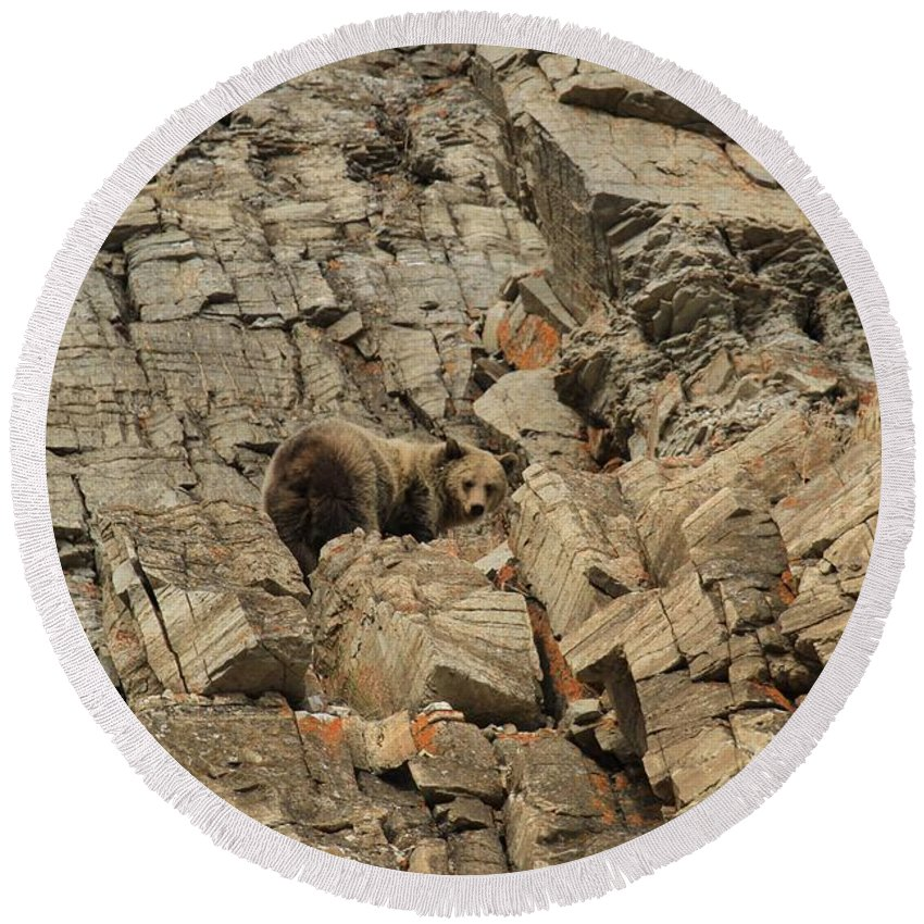 Grizzly Bear Round Beach Towel featuring the photograph On The Edge Of Glory by Adam Jewell