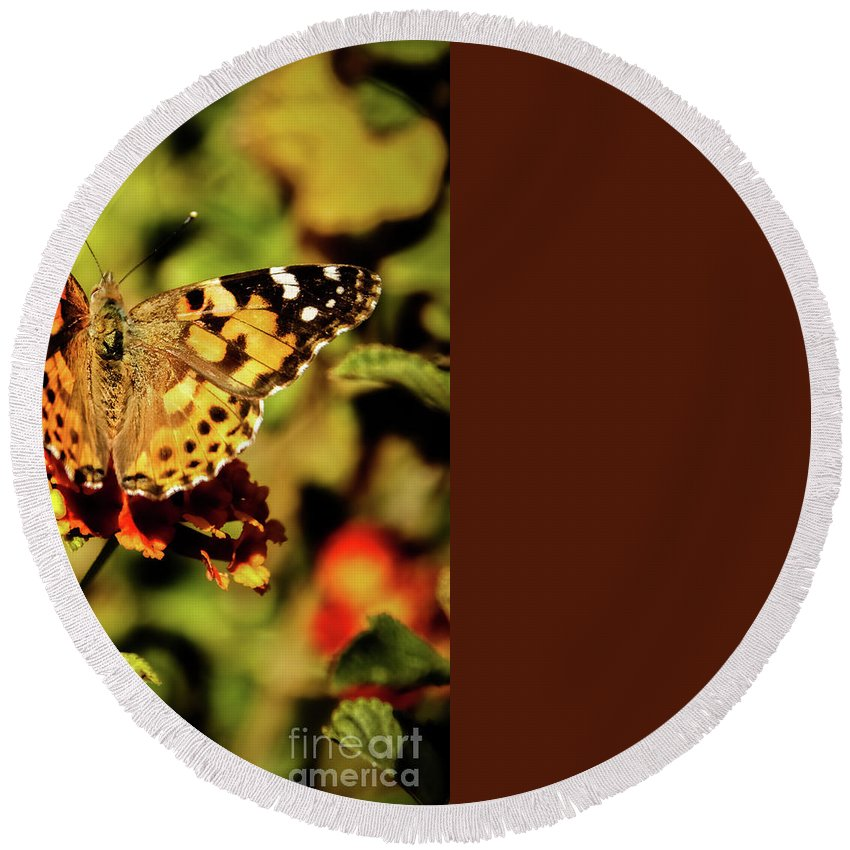 Butterfly Round Beach Towel featuring the photograph Painted Lady by Robert Bales