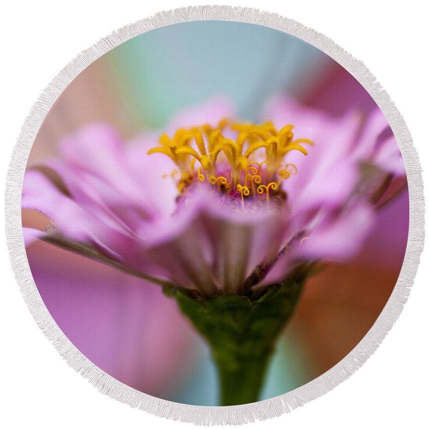 Flower Round Beach Towel featuring the photograph Pink Zinnia by Amy Jackson