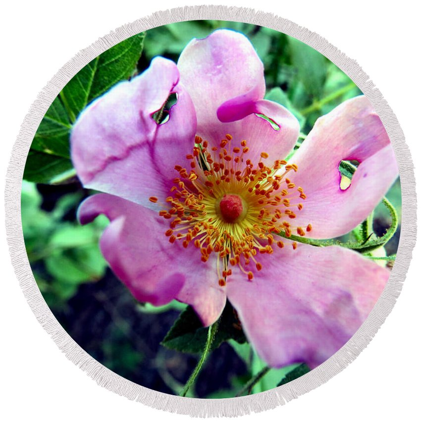Flower Round Beach Towel featuring the photograph Pinklet by Art Dingo