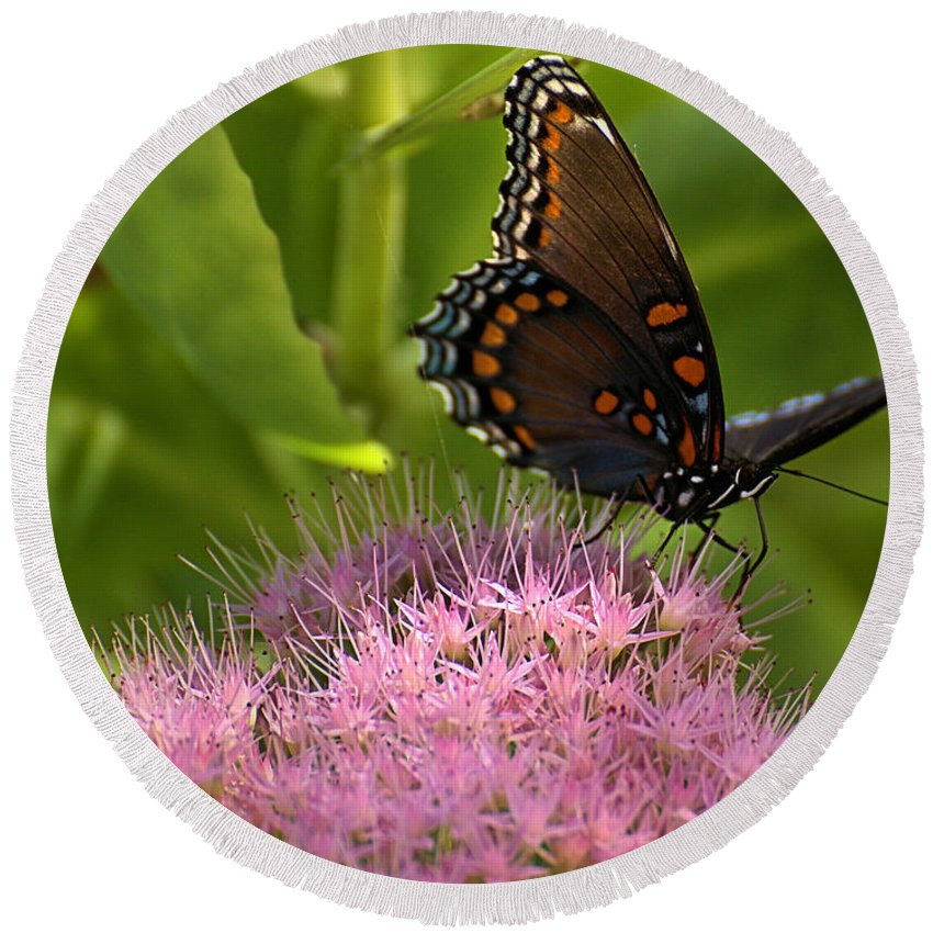 Butterfly Round Beach Towel featuring the photograph Red Spotted Purple Butterfly On Sedum by Mel Hensley