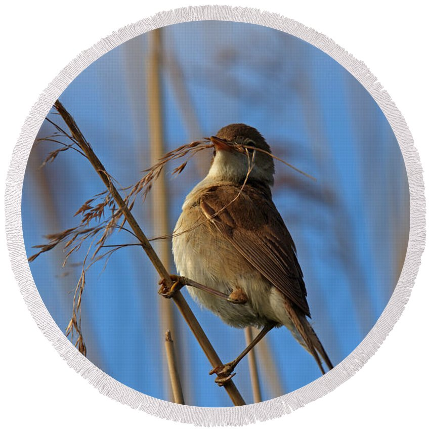 Reed Round Beach Towel featuring the photograph Reed Warbler by David Pringle