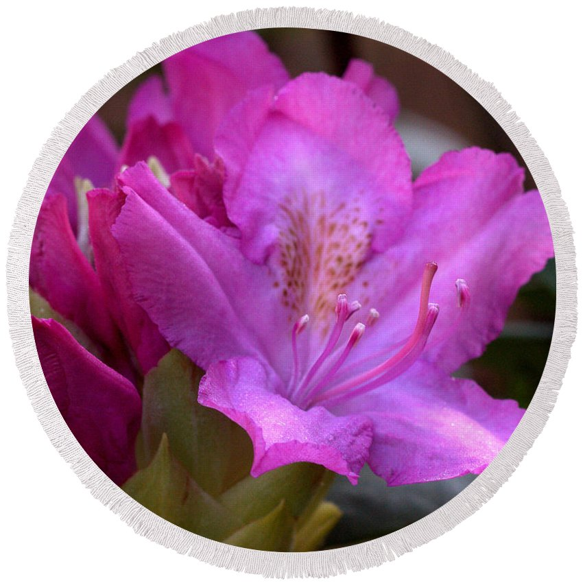 Rhodendron Round Beach Towel featuring the photograph Rhododendron Bloom by Mel Hensley