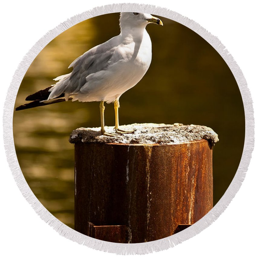 Ring-billed Gull Round Beach Towel featuring the photograph Ring-billed Gull On Pillar by Onyonet Photo Studios