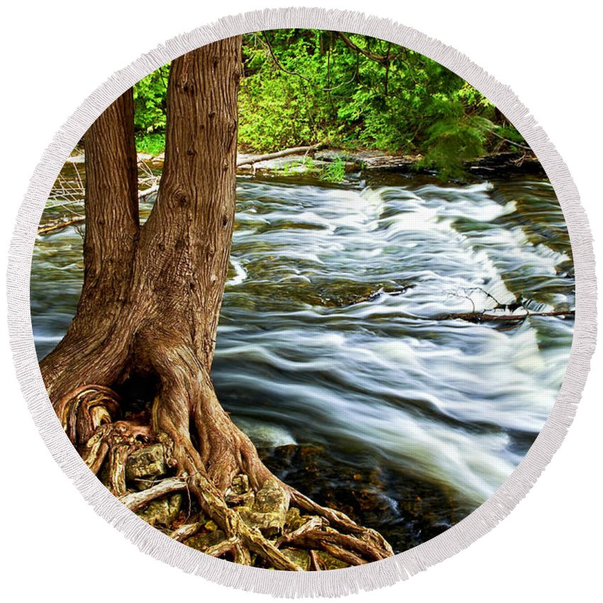 Trunk Round Beach Towel featuring the photograph River Through Woods by Elena Elisseeva