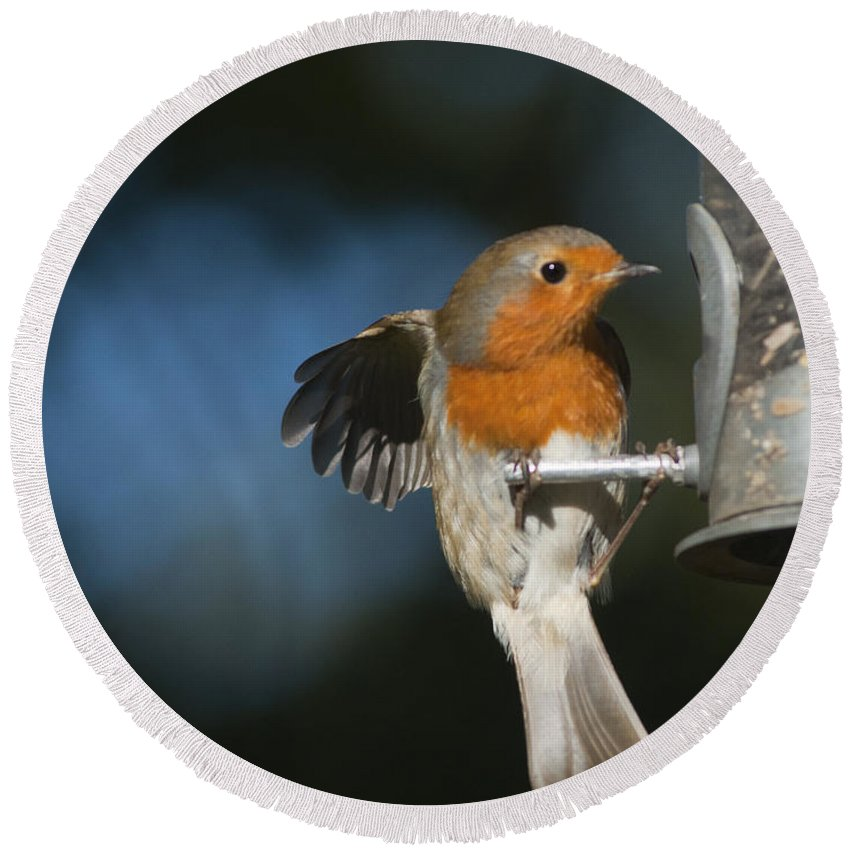 Britain Round Beach Towel featuring the photograph Robin by Andrew Michael