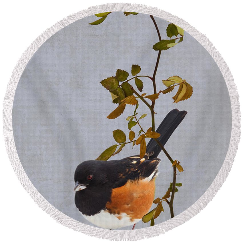 Snow Round Beach Towel featuring the photograph Rufous-sided Towhee by Ron Jones