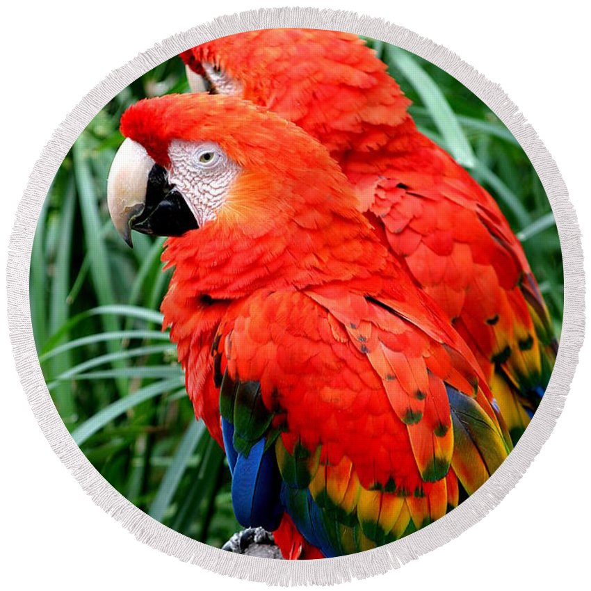 America Round Beach Towel featuring the photograph Scalet Macaw by Henrik Lehnerer