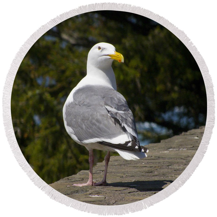 Seagull Round Beach Towel featuring the photograph Seagull by David Gleeson
