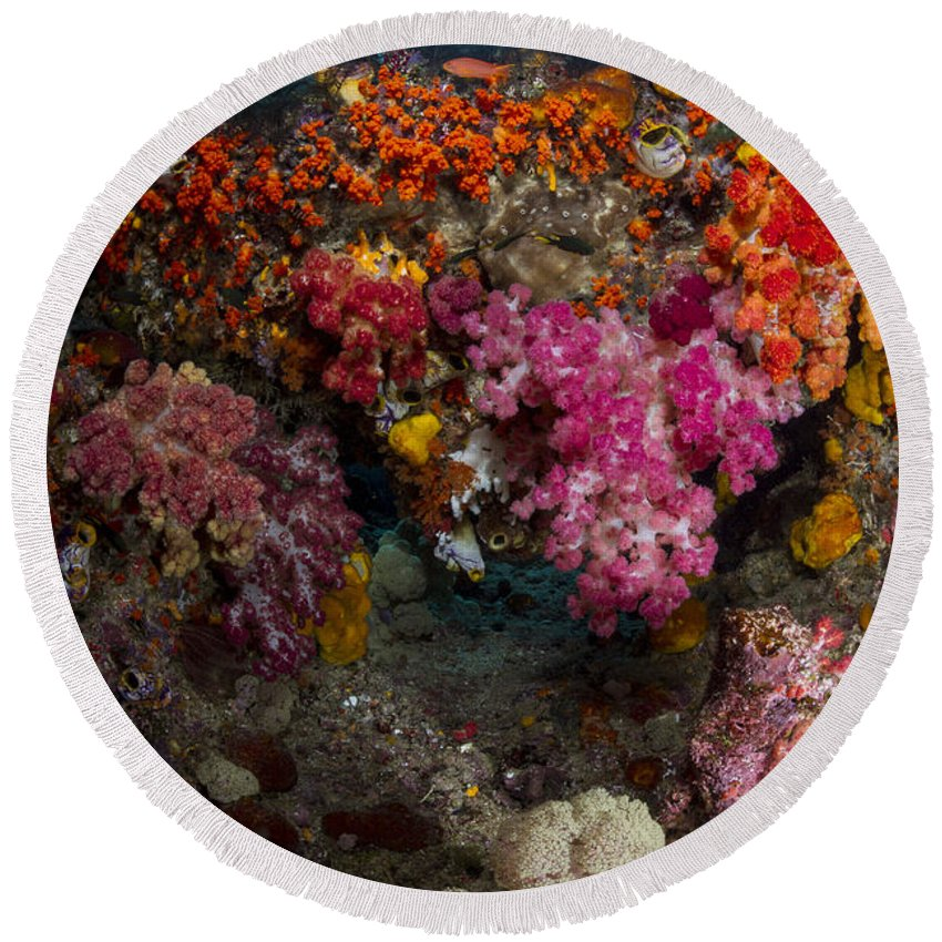 Raja Ampat Round Beach Towel featuring the photograph Soft Coral In Raja Ampat, Indonesia by Todd Winner