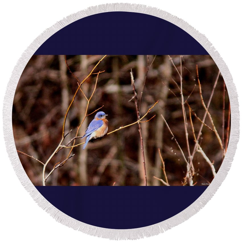 Eastern Bluebird Round Beach Towel featuring the photograph Standout by Travis Truelove