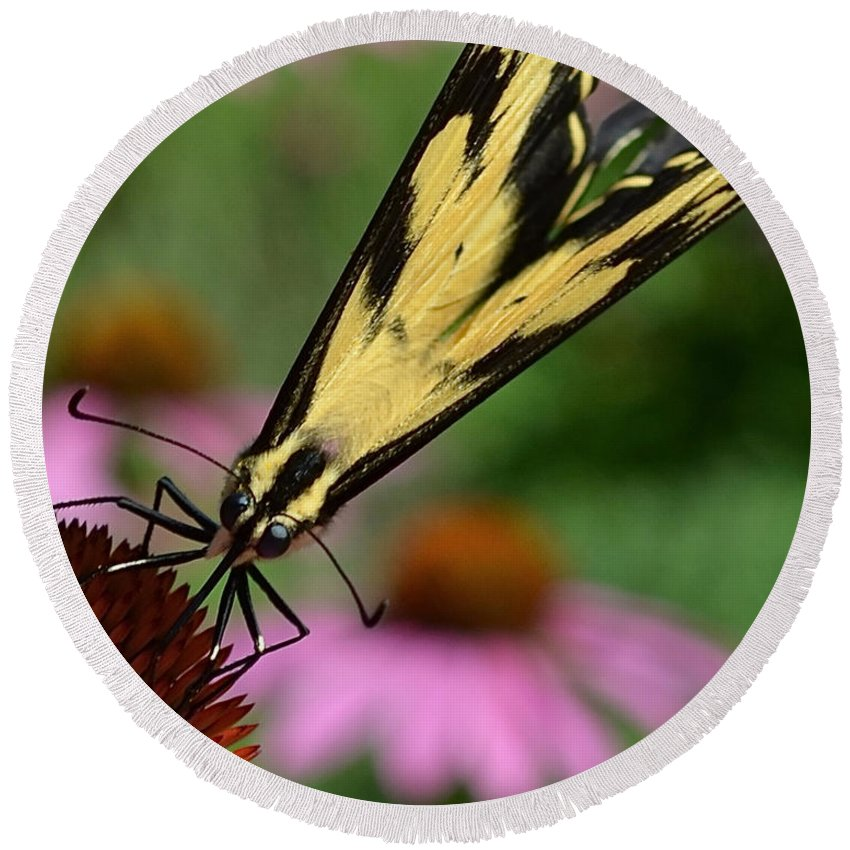 Color Photography Round Beach Towel featuring the photograph Swallowtail by Sue Stefanowicz