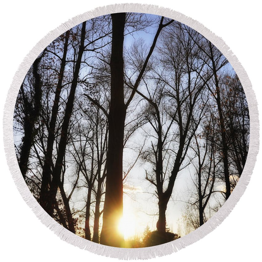 Trees Round Beach Towel featuring the photograph Trees With Sunlight by Mats Silvan