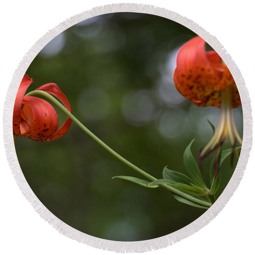 Orange Round Beach Towel featuring the photograph Turk's Cap Lily by Mel Hensley