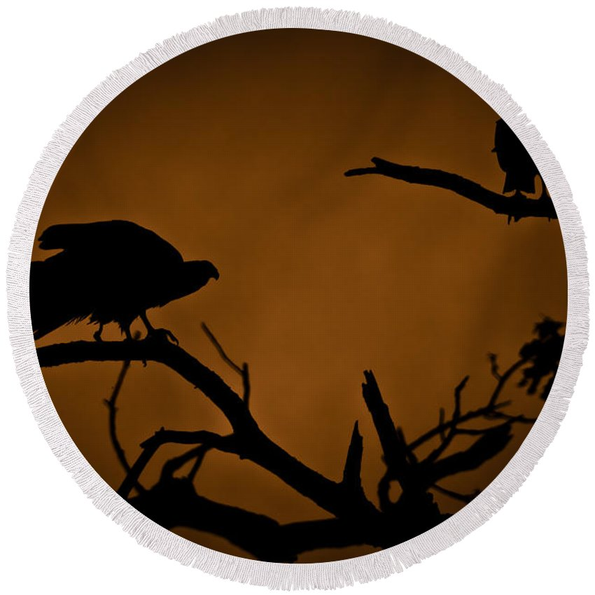 Vultures Round Beach Towel featuring the photograph Watcher by Kim Henderson