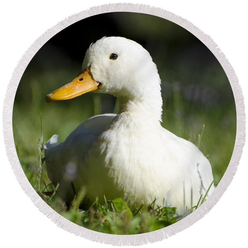 Duck Round Beach Towel featuring the photograph White Duck by Mats Silvan