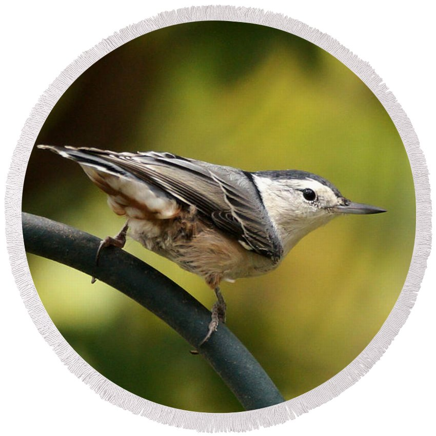 Birds Round Beach Towel featuring the photograph Nuthatch by Lori Tordsen